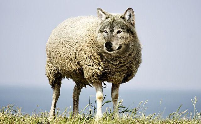 1 Año Gratis Suscripción Lobo Negro